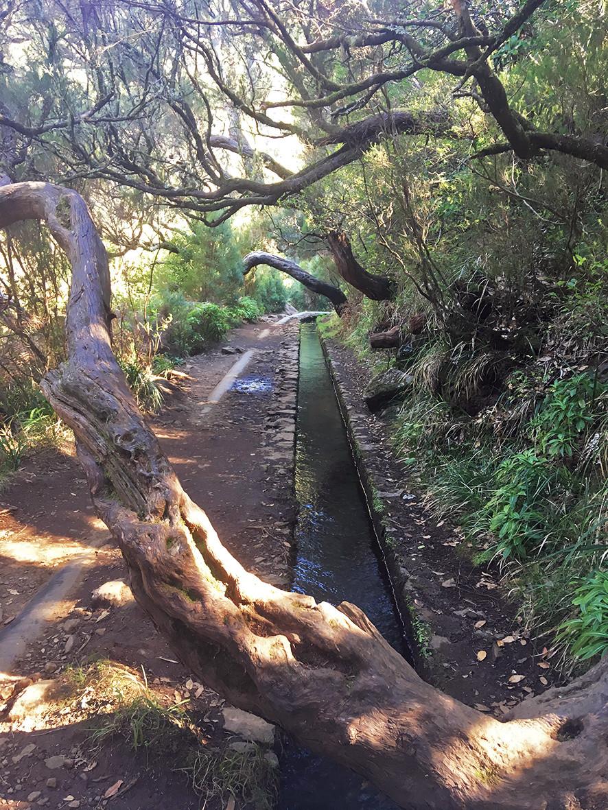 Green levada in Madeira