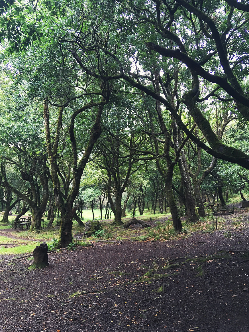 Laurisilva UNESCO forest