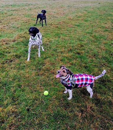 Milo, Geoff and Titch.jpg