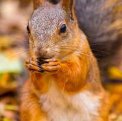 Common-Squirrel.jpg