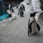 penguins-web_edited.jpg