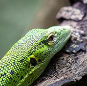 Emerald monitor.jpg