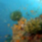 fish-ocean.png