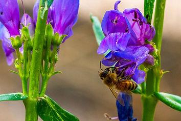 PGF-bee-3.jpg