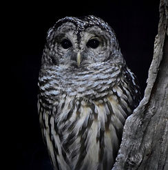 animal-nature-outdoors-wildlife-bird-zoo