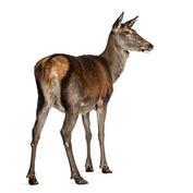 Red-Deer.jpg