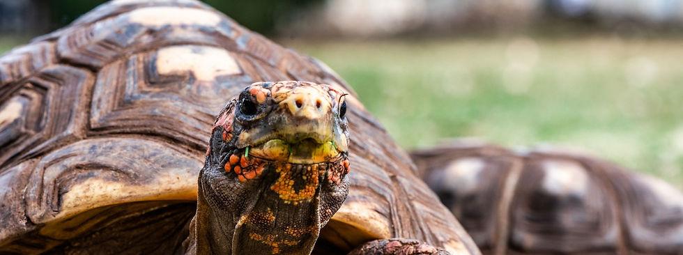 Turtle-2_edited.jpg