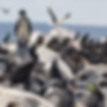 penguins-habitat.png