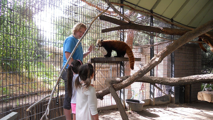 Red panda BTS 2