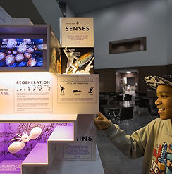 micro museum.jpg