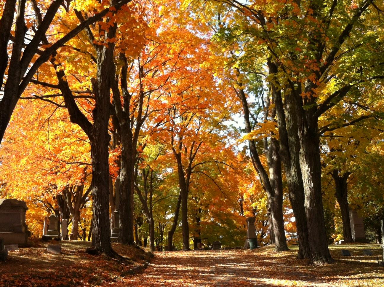 Fall+13+bigger+picture.jpg