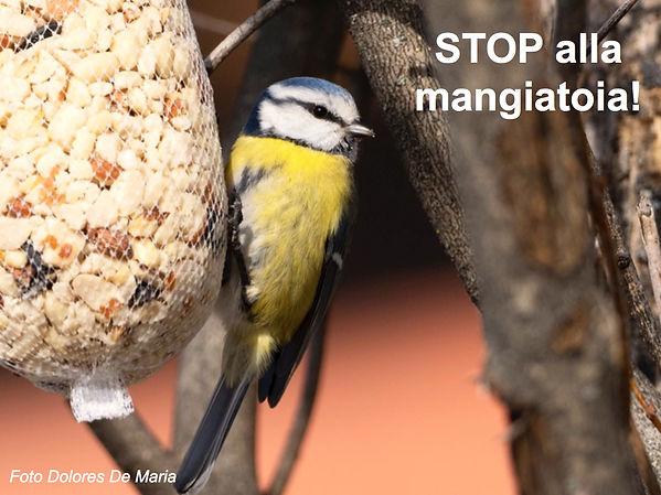 Stop Mangiatoia.jpg