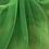 Thumbnail: Green - Crystal Organza