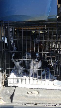 Colorado Puppy Run 14