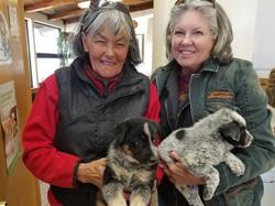 Colorado Puppy Run4