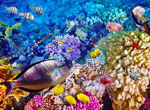 Marea Bariera de Corali