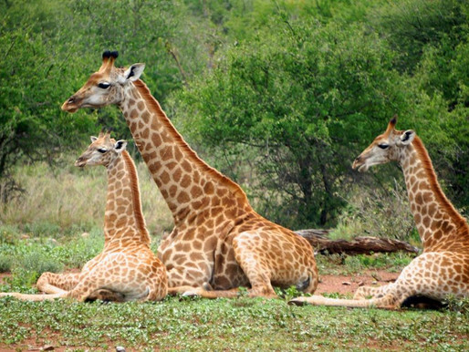 Parcul National Kruger, Africa de Sud