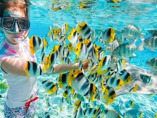 Snorkeling si Scuba Diving in Egipt