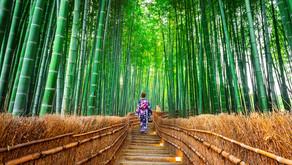 Padurea de Bambus din Kyoto, Japonia