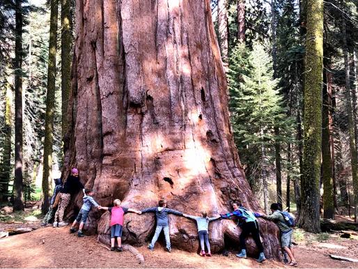 Parcul National Sequoia, SUA