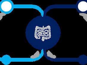 Ex-vivo organ perfusion: application to rat small intestine