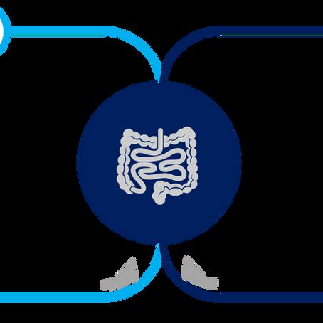 【Ex-vivo臓器灌流】消化管研究への応用例(ラット小腸灌流実例)