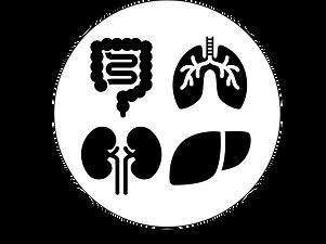 臓器実験.png