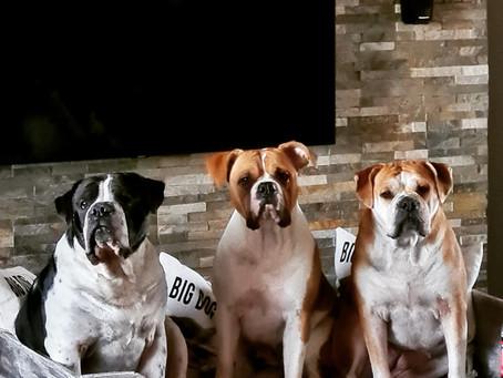 Wir Hunde und Corona