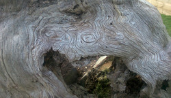 Beautiful Deadwood Habitat