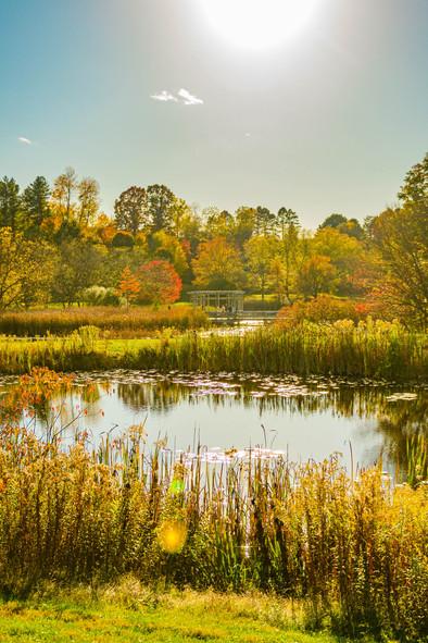 savannalim.fall2020-34.jpg