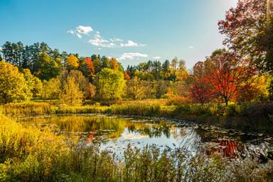 savannalim.fall2020-33.jpg