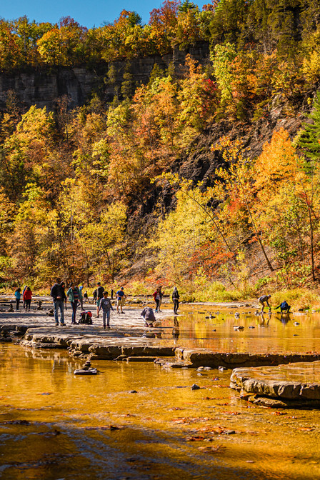 savannalim.fall2020-16.jpg