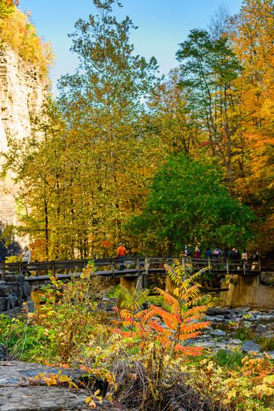 savannalim.fall2020-26.jpg