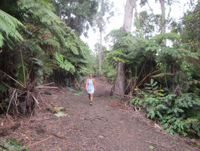 Day Hike In the Kaloko Cloud Forest