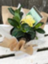 plant22.jpeg