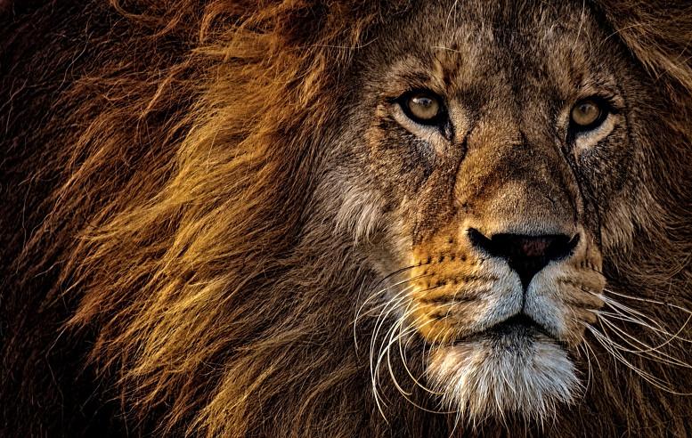 lion-3576045_1920.jpg