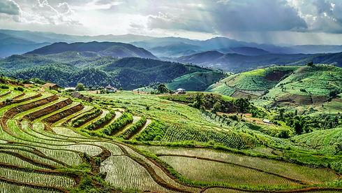 Jiaogulan Landschaft.jpg