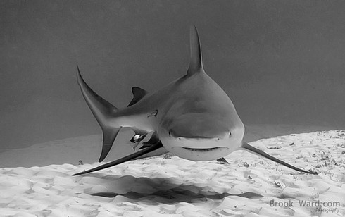 Baby Shark doo doo doo doo doo doo….