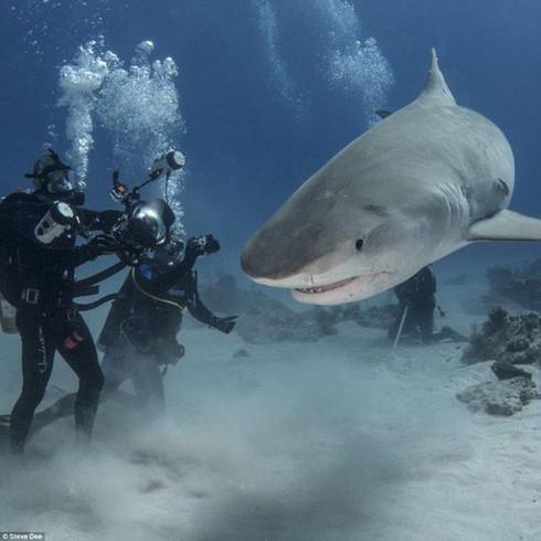 ฉลามนักล่า กับ มนุษย์ที่น่ากลัวมากกว่า...