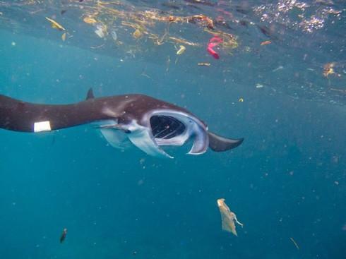 Plastic Ocean : ทะเลป่วยหนัก ก็เพราะเรารักทะเล(ไม่เป็น)
