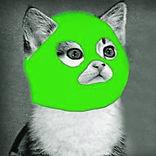the-green-cat-tel-aviv-samenwerking.jpg