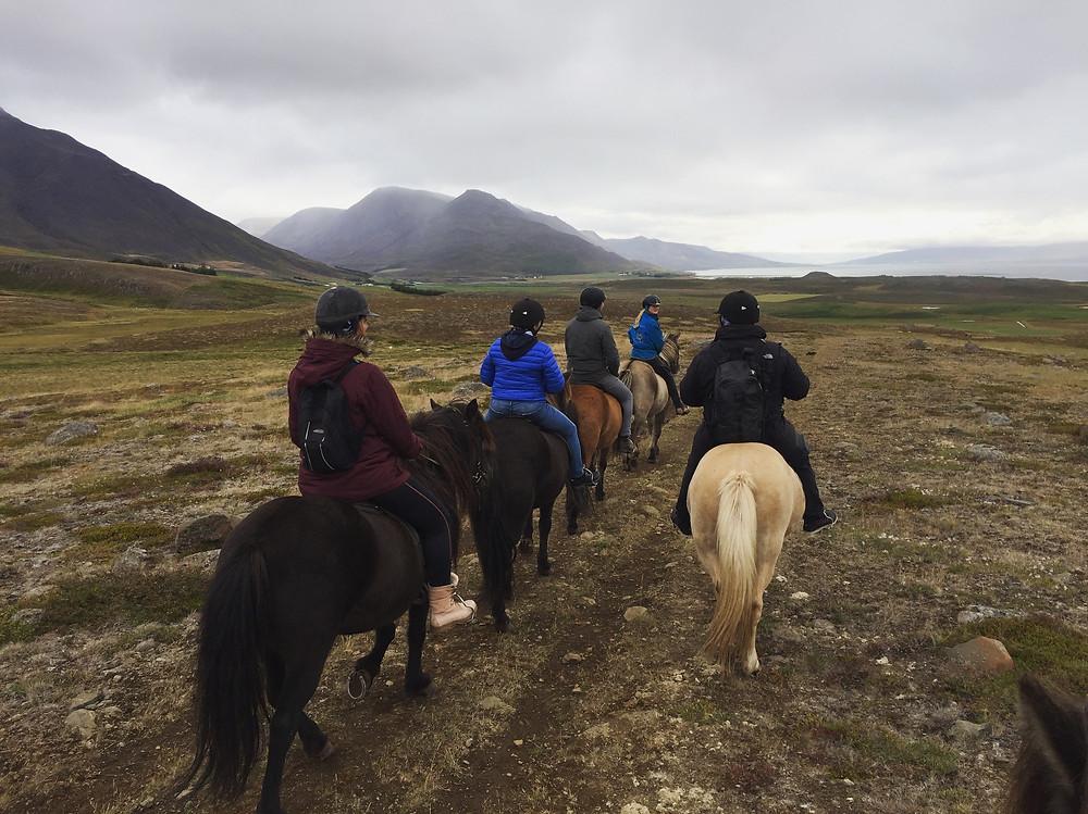 Paardrijden in IJsland waar dierenwelzijn hoog in het vaandel staat
