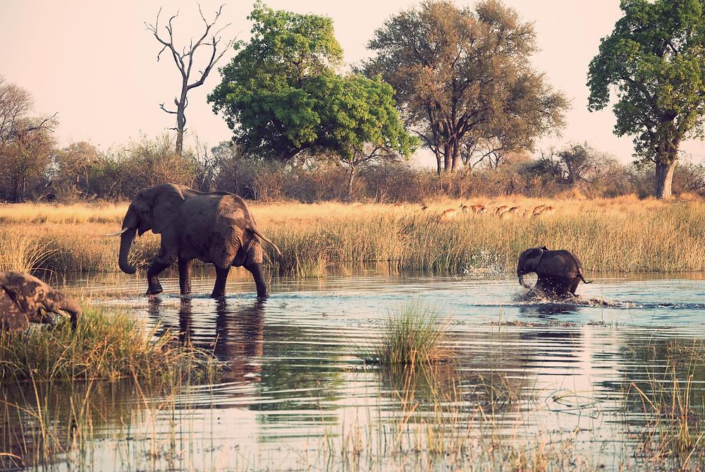 Duurzame wildlife reizen