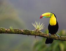 duurzame-eilanden-biodiversiteit-costa-r