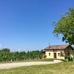 Wijn proeven in Oost-Slovenië