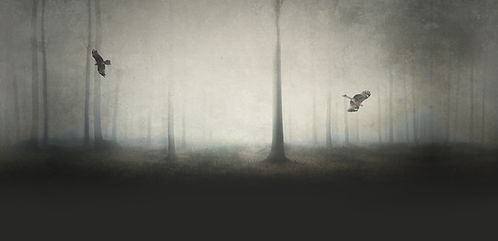 Photo d'une forêt brumeuse d'apparence fantomatiquee