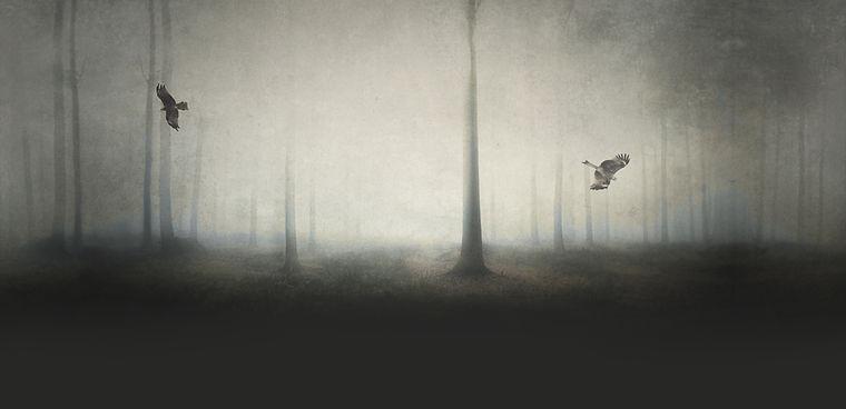 Bosque spooky