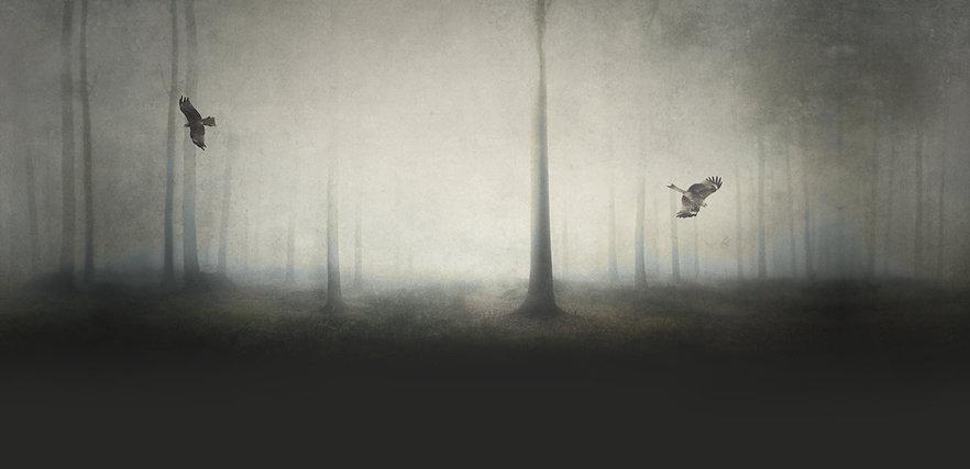 Spooky Wald