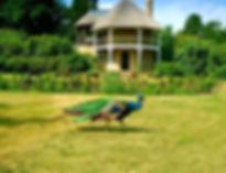 swiss garden.docx.jpg