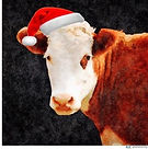 xmas cow barn.jpg